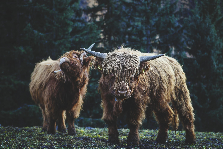 kasuma_fotoblog_fotografie_autumn_switzerland_2015_highlanders