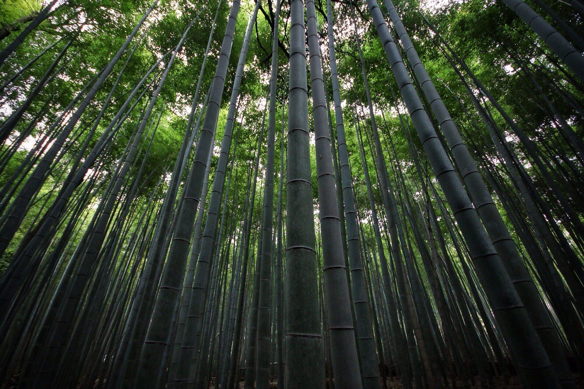 bamboo_forest_kyoto_kasuma_photo_blog