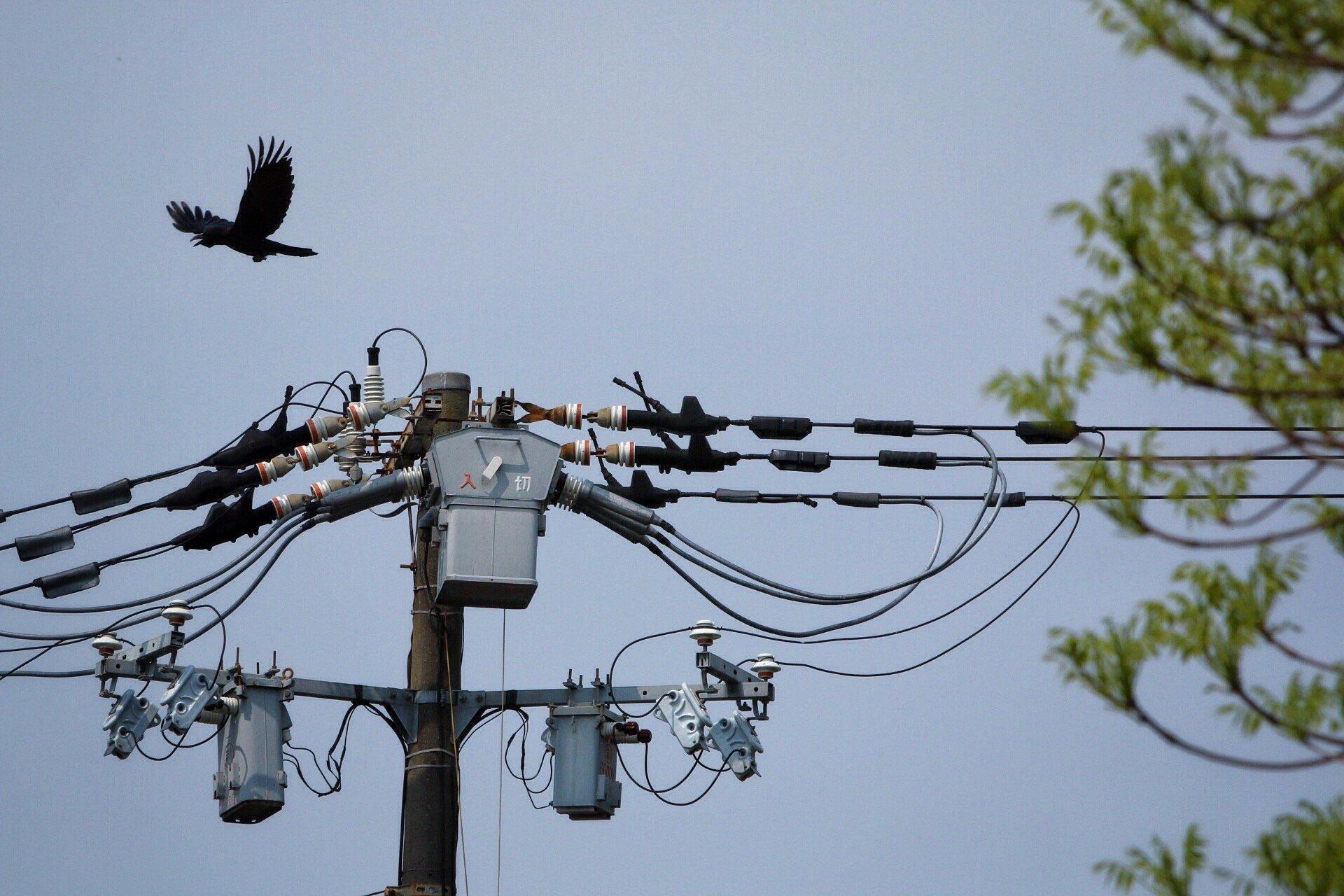 hyotanyama-raven-flying-foto-blog-kasuma