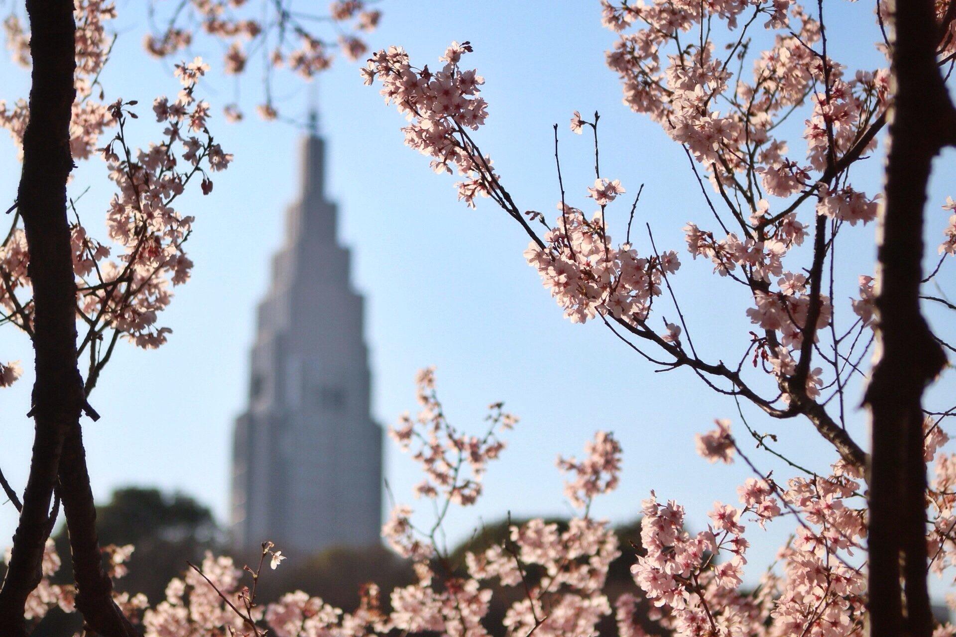 sakura-cherry-blossom-kasuma-tokyo-garden-photography-blog