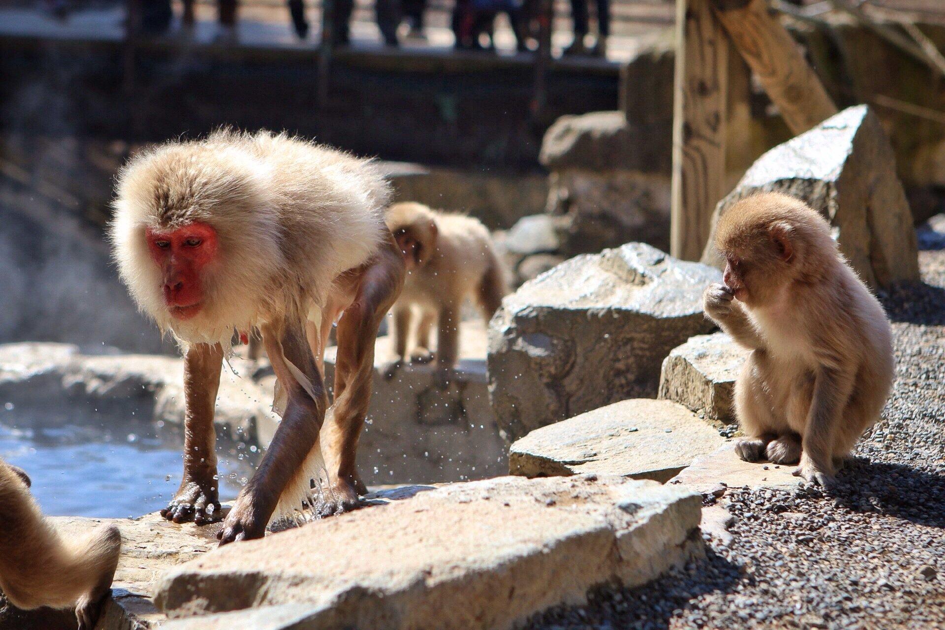 snow-monkeys-1-kasuma-photo-blog