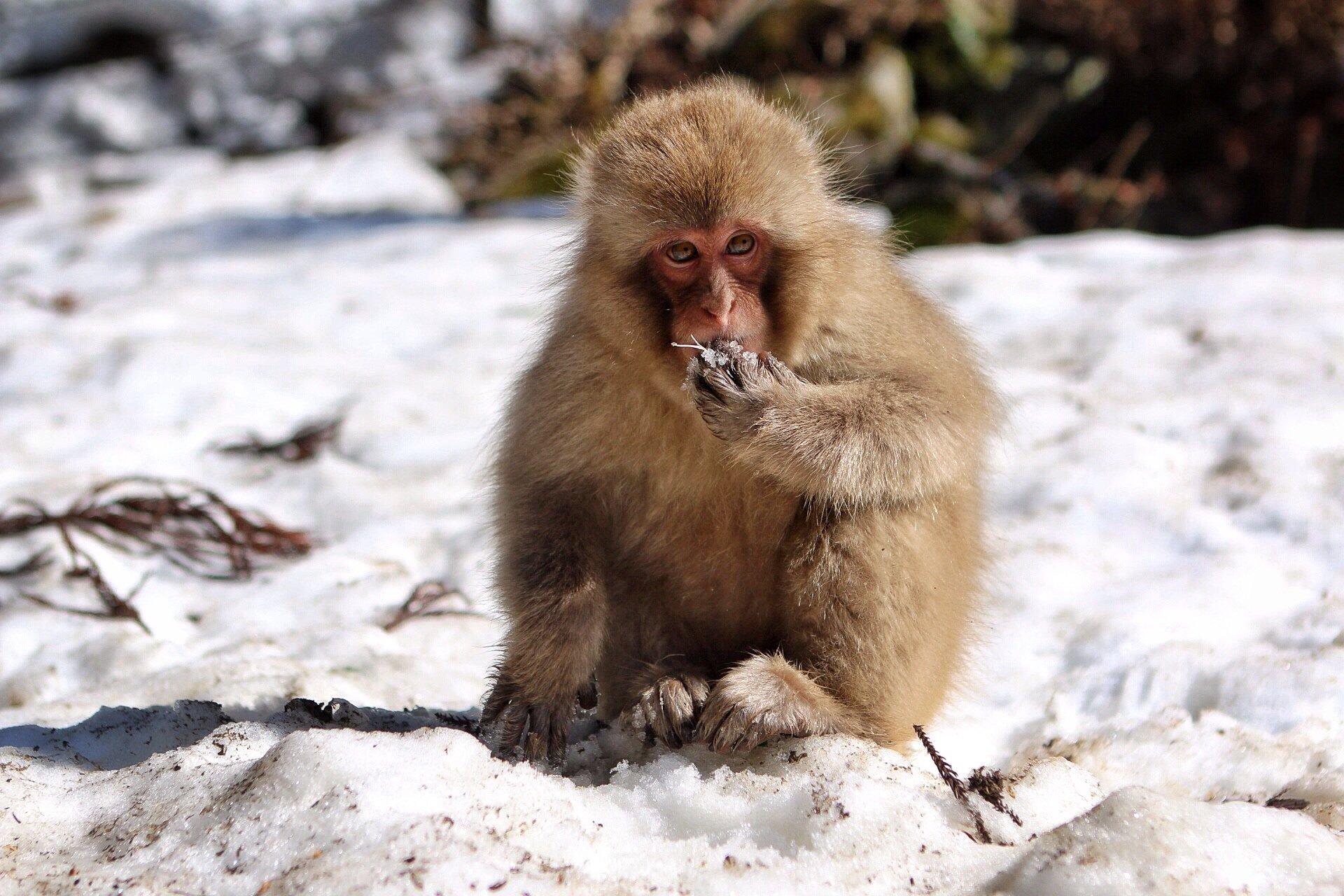 snow-monkeys-2-kasuma-photo-blog
