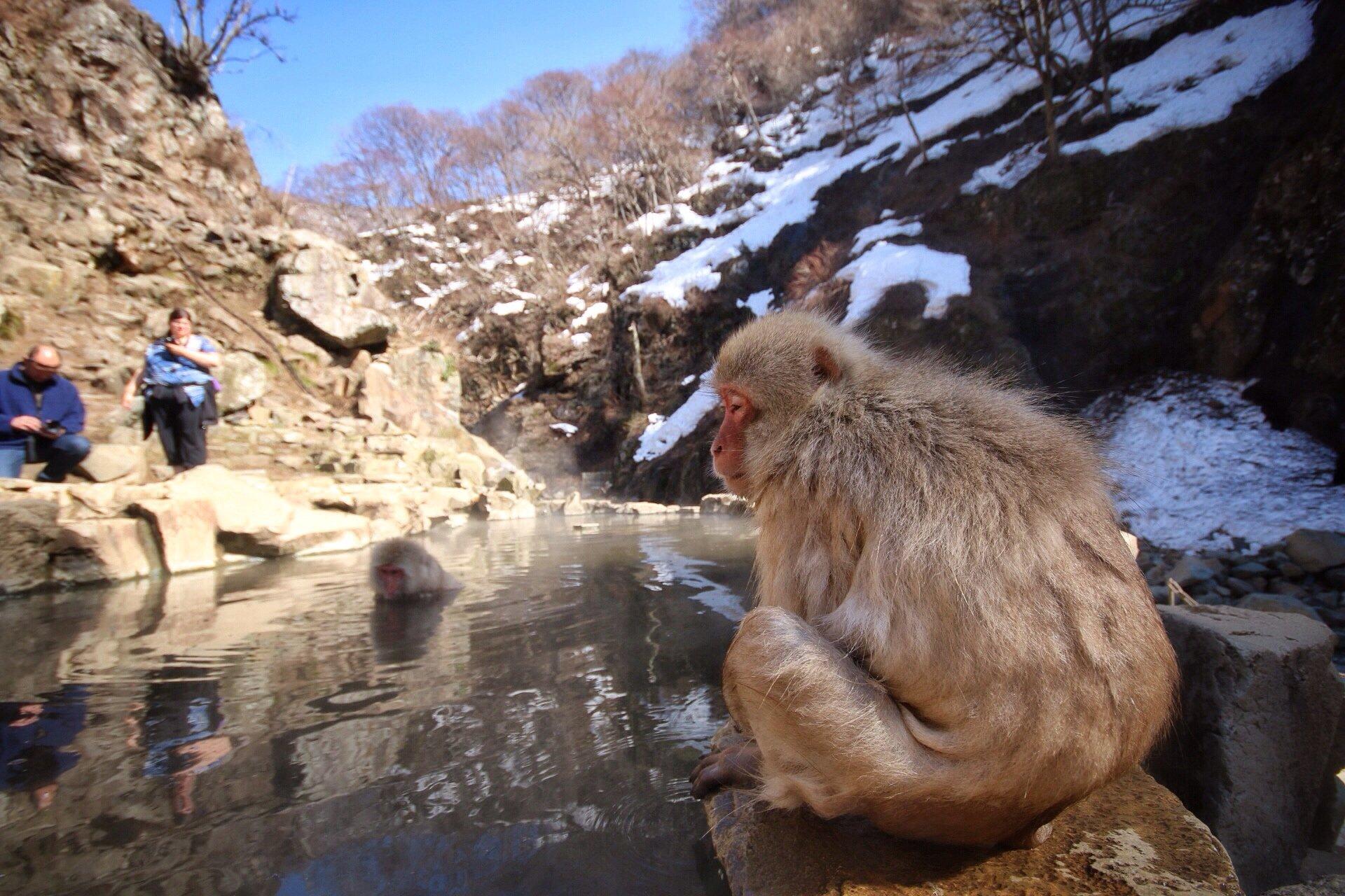 snow-monkeys-3-kasuma-photo-blog