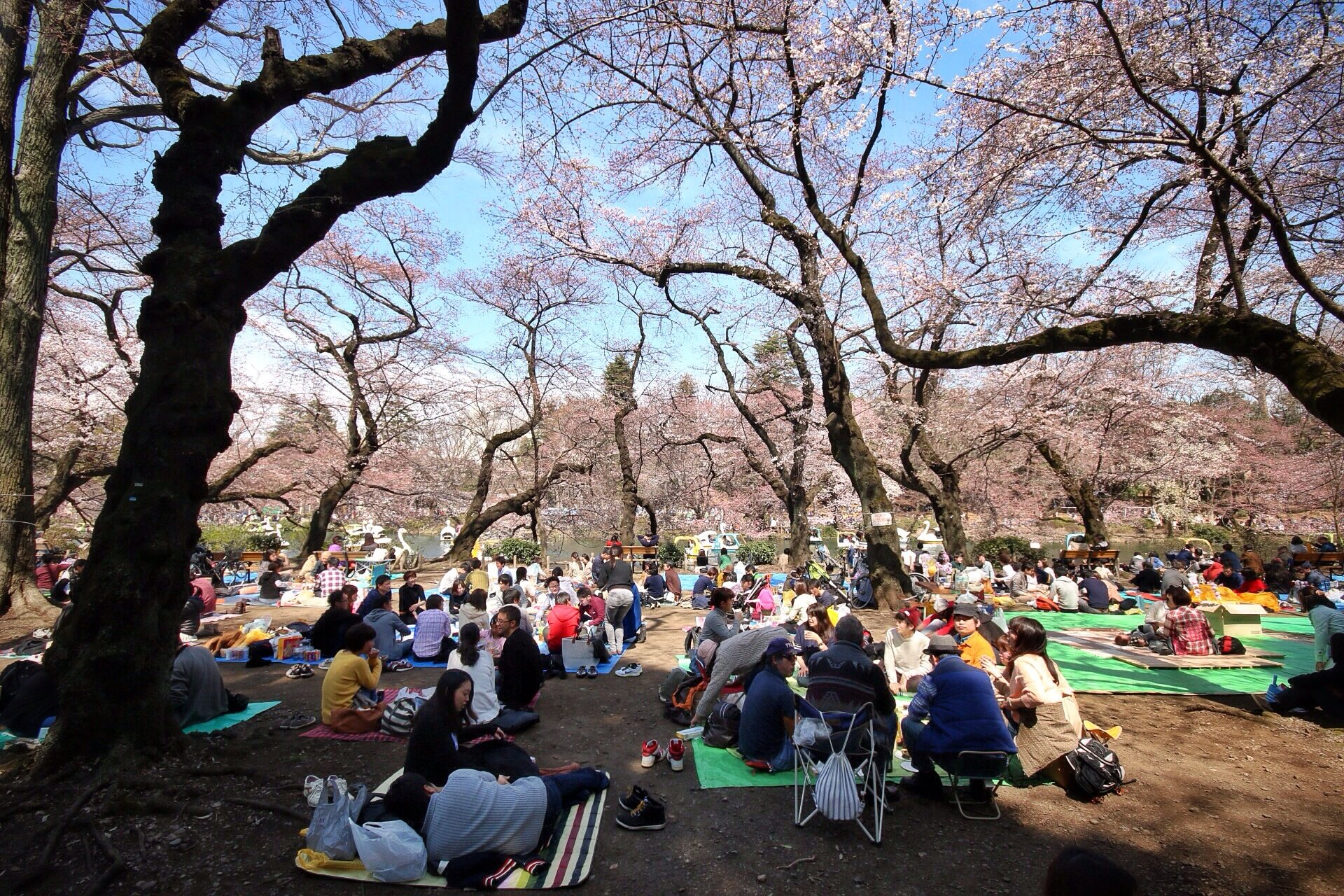 tokyo-hanami-sakura-kasuma-photo-blog