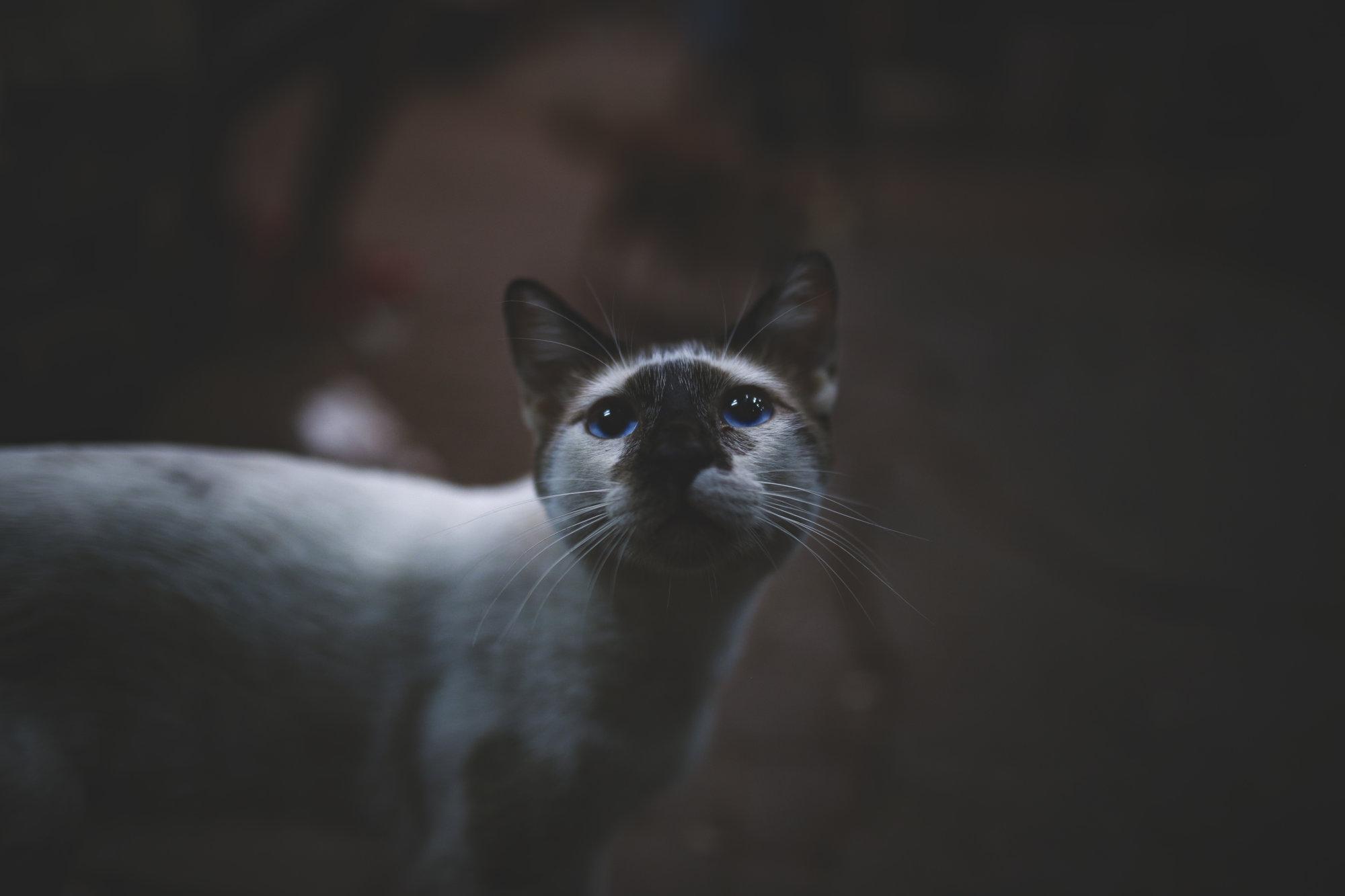 cat-power-marokko-2016-mcu-ausflug