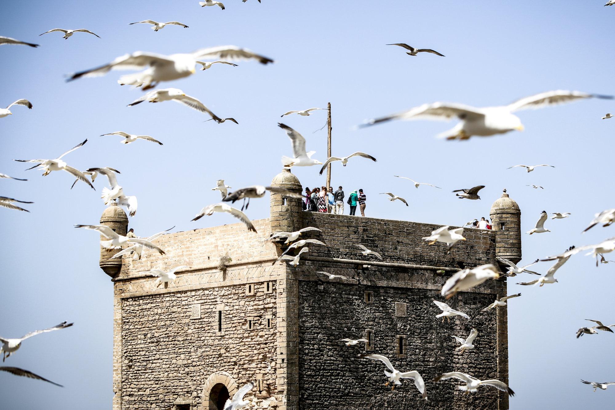 essaouira-chaos-birds-marokko-2016-mcu-ausflug
