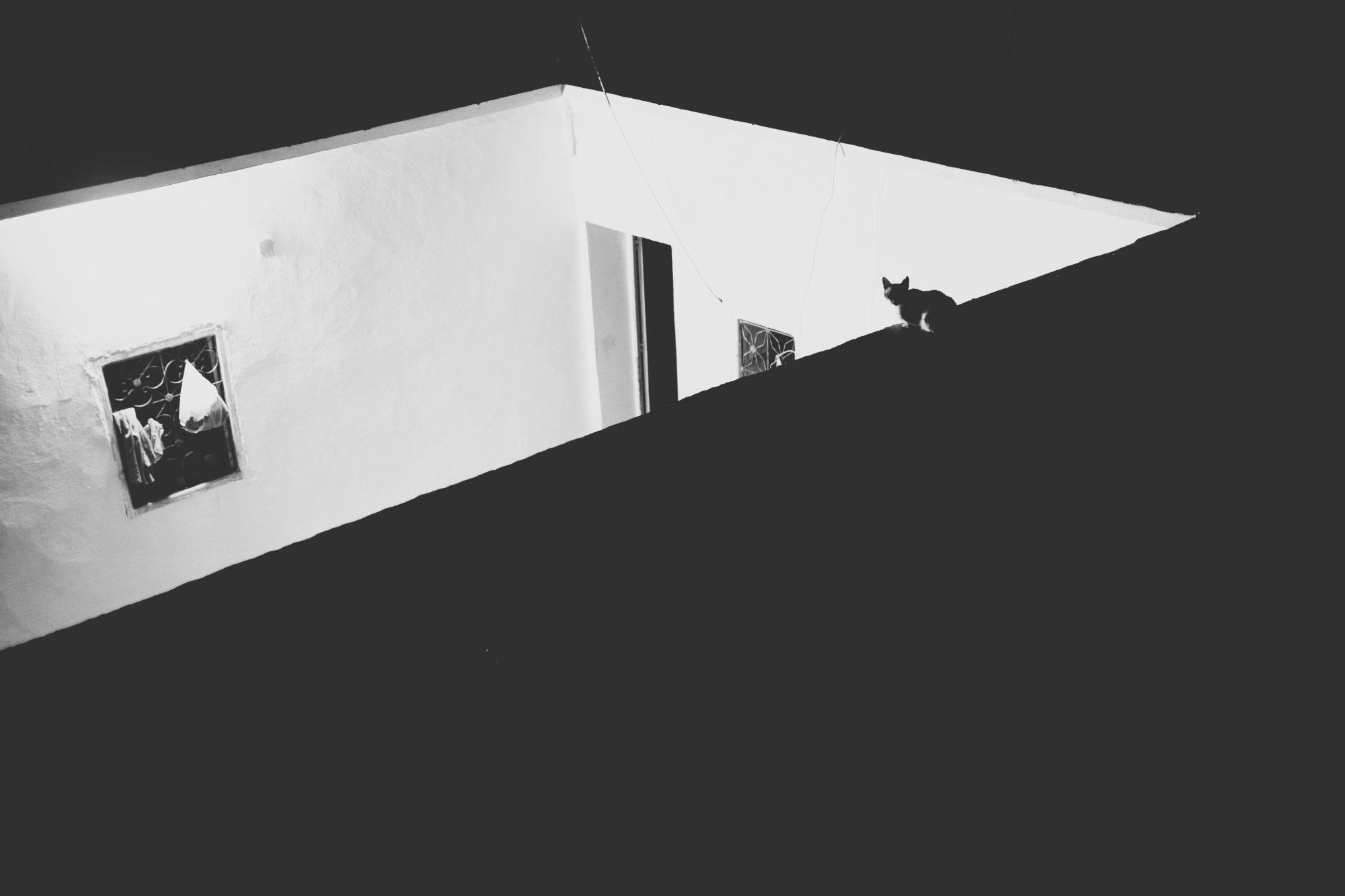security-cat-on-duty-taroudant-marokko-2016-mcu-ausflug